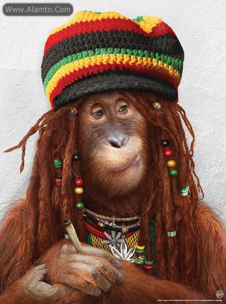 عکس میمون های فشن فوق العاده خنده دار