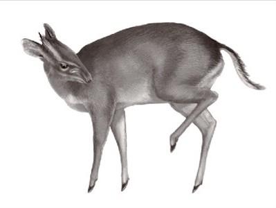 7 گونه استثنایی کشف شده در سال 2010 +تصاویر | www.Alamto.Com