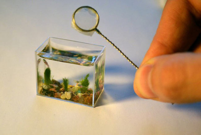 کوچکترین آکواریوم جهان +عکس