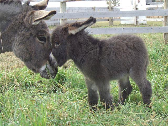 عکس هایی جالب و خنده دار از حیوانات | www.Alamto.Com