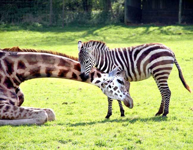 عکس+حیوانات+بسیار+زیبا