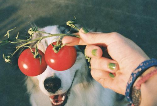 تصاویر خنده دار و جالب از حیوانات | www.Alamto.Com