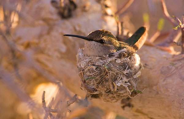 عکس های بسیار زیبا از دنیای پرندگان | www.Alamto.Com