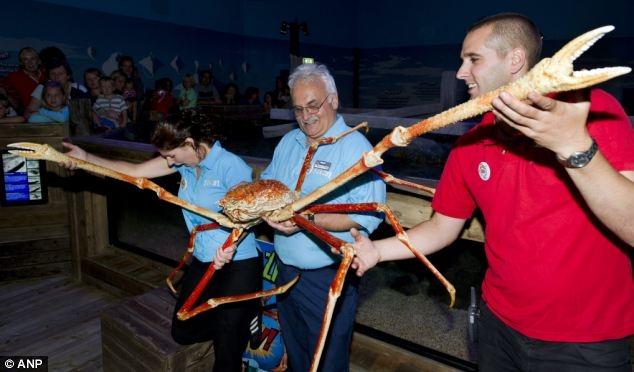 بزرگترین خرچنگ جهان! (+عکس)
