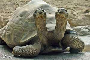 عکس های دیدنی از حیوانات عجیب دوسر!! | www.Alamto.Com