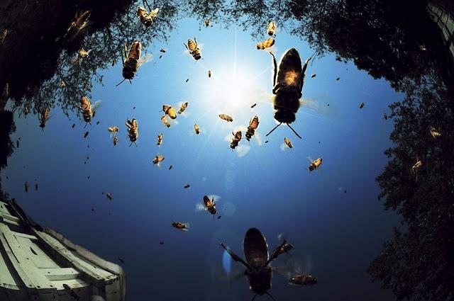 عکس های بسیار زیبا از هنر های خداوند | www.Alamto.Com
