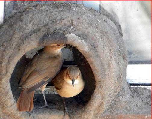 مراحل ساختن لانه توسط یک پرنده (عکس) | www.Alamto.Com