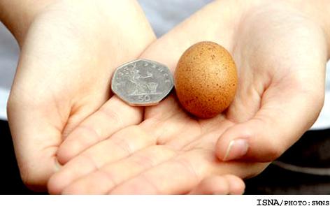 کوچک ترین تخم مرغ جهان!! + عکس