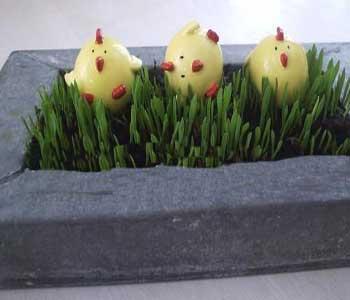 مدل سبزه برای هفت سین نوروز 90