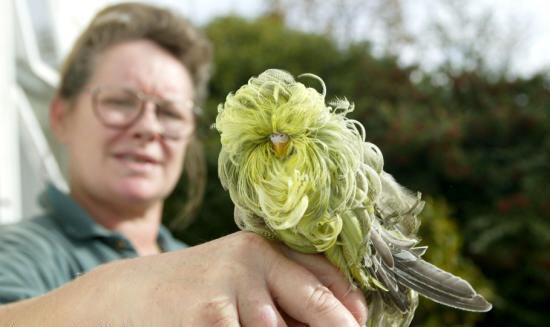 عجیب ترین مرغ عشق دنیا (عکس) | www.Alamto.Com