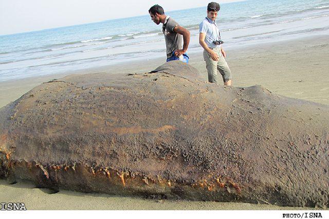مرگ نهنگ ٢٠ تنی در اثر برخورد با موتور کشتی (تصویری)