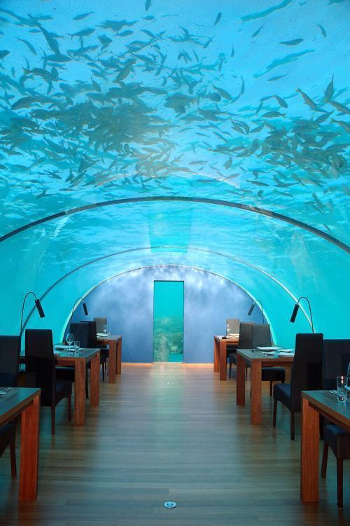 رستورانی زیر آب ! (عکس) | www.Alamto.Com
