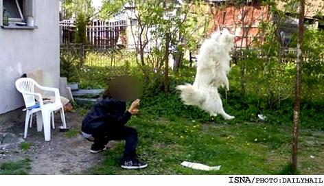 نوجوانی که سگش را دار زد و فیلمش را پخش کرد!! +عکس