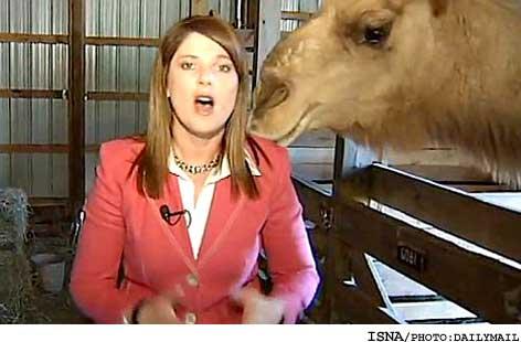 شتر در برنامه زنده موهای زن خبرنگار را خورد +تصاویر