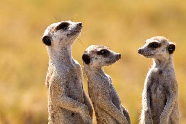 عکس های بسیار زیبا و دیدنی از دنیای حیوانات | www.Alamtro.Com