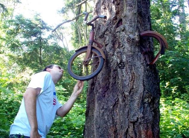 عکس هایی جالب از درختانی که وسایل را میخورند! | www.Alamto.Com