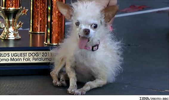 زشتترین سگ دنیا معرفی شد + عکس