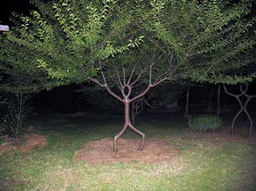 عکس درخت Sculpted Trees