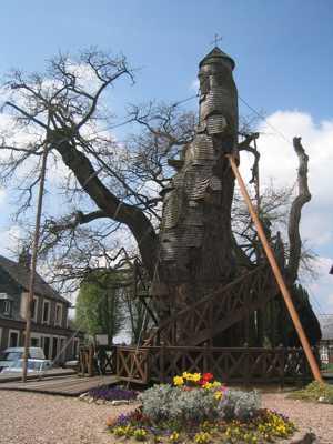 عکس درخت Chapel Oak