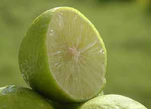 لیمو رو به رژیم غذایی خود بیفزایید