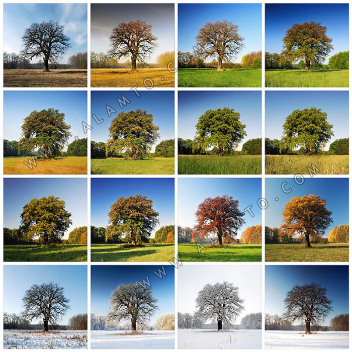 عکسی دیدنی از یک درخت در چهار فصل