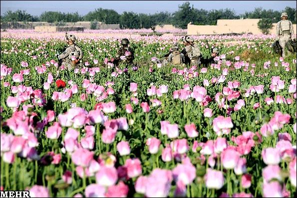 عکس های مزارع خشخاش در افغانستان