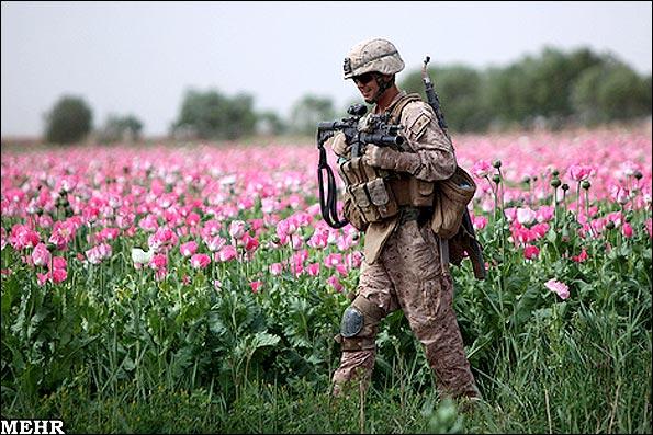 تصاویر مزارع خشخاش در افغانستان - سربازان آمریکایی در مزارع چه می کنند