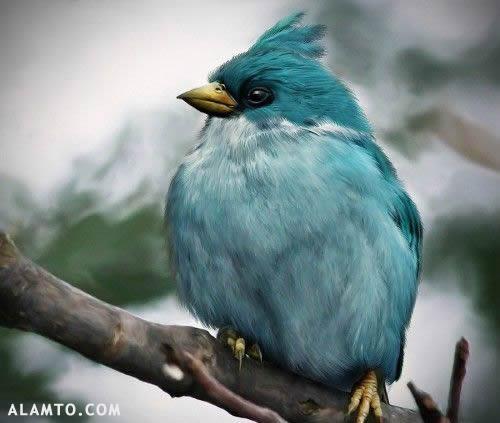 پرندگان خشمگین در حیات وحش واقعی / عکس
