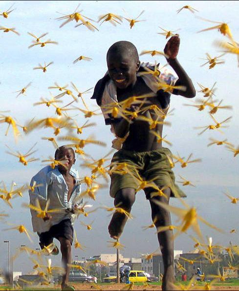 حمله ملخها در سنگال  Sep 01/2004