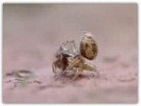 کلیپ فوق العاده دیدنی نبرد مورچه و عنکبوت