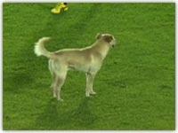 ورود سگ به زمین فوتبال