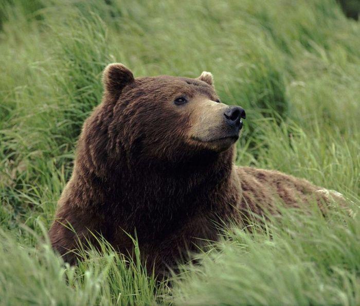 عکس حیوانات کوهی