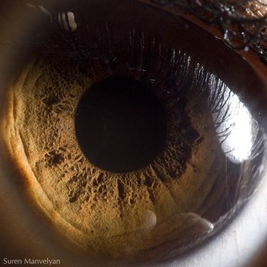 عکاسی ماکرو از چشم انسان