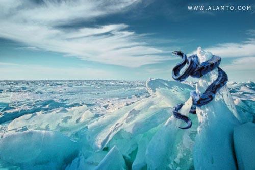 تصاویر فوق العاده زیبا از قدرت فتوشاپ