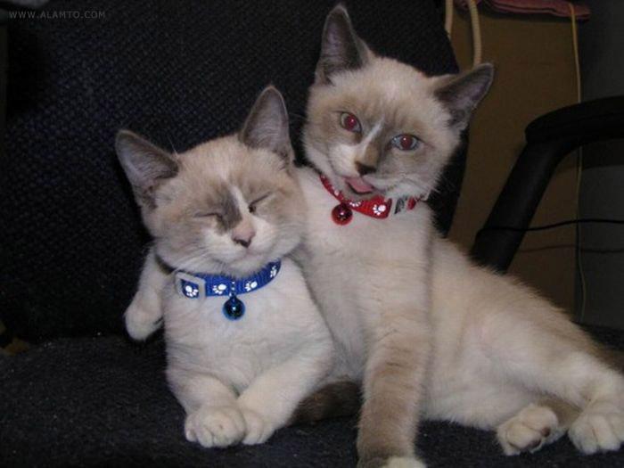 عکس گربه های ناز و نجیب - Alamto.Com