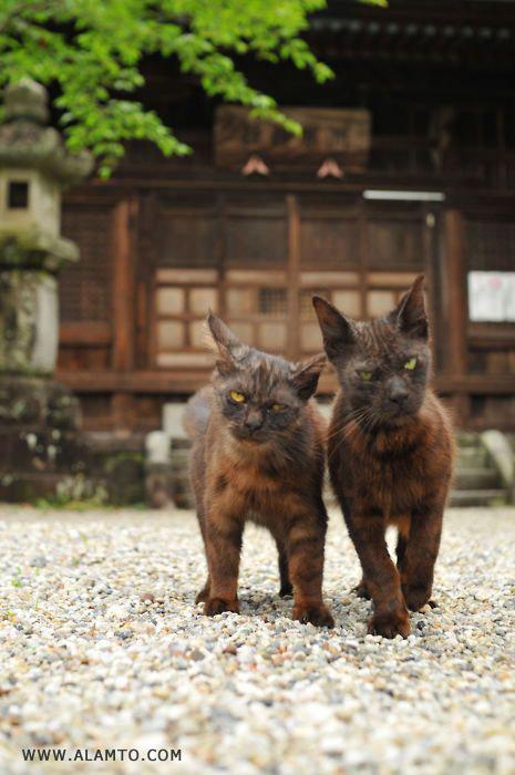 عکس گربه های ولگرد خیابانی - Alamto.Com