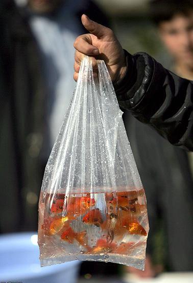 تاریخچه و فلسفه ماهی قرمز در سفره هفت سین