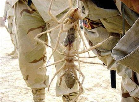 عکس هایی از حشرات غول پیکر!