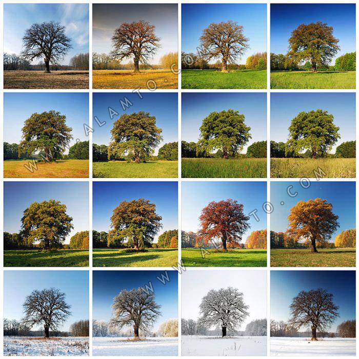 عکس یک درخت در چهار فصل