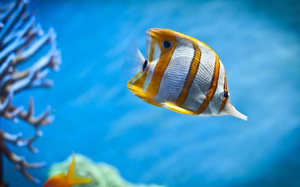 عکس های دیدنی از ماهی های زینتی و آکواریومی