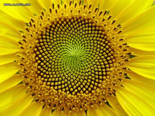 10 گل عجیب اما زیبا و دیدنی ! + عکس