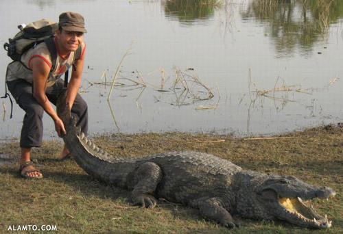 عکس تمساح و آدم