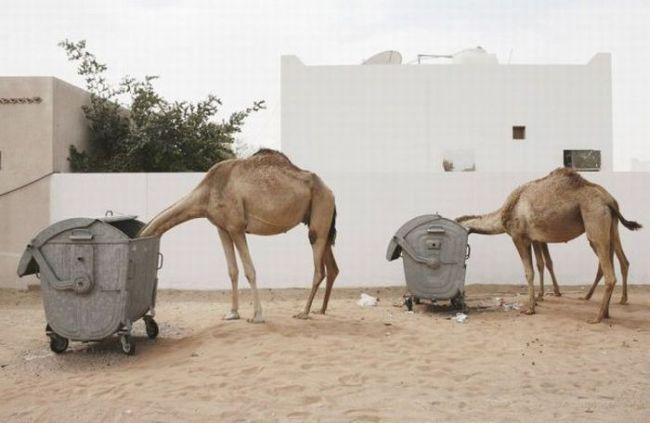 عکسای منتخب امروز 26 مرداد ماه ۱۳۹۰ - Alamto.Com