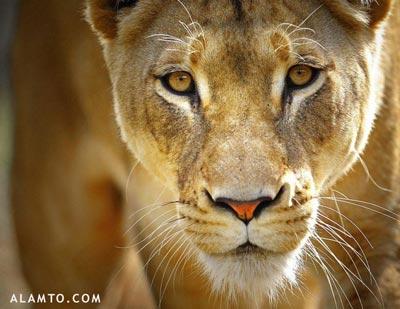 تصاویر فوق العاده زیبا و دیدنی از دنیای حیوانات